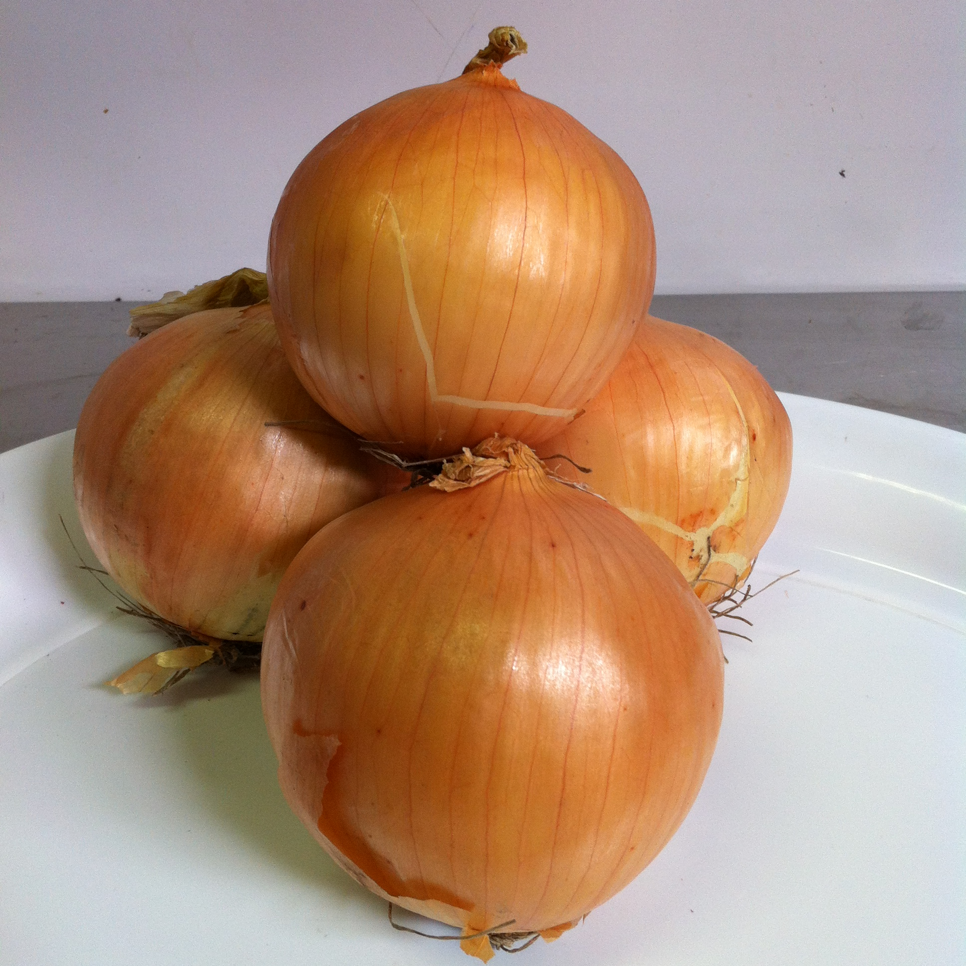Brown Onion kg