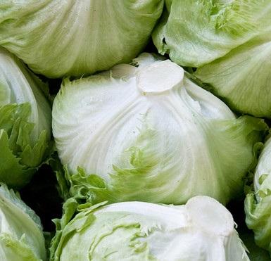Iceberg Lettuce (2)