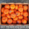 Mandarin Afourer Box – Buying The Box